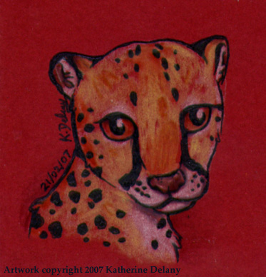 Cheetah portrait on red